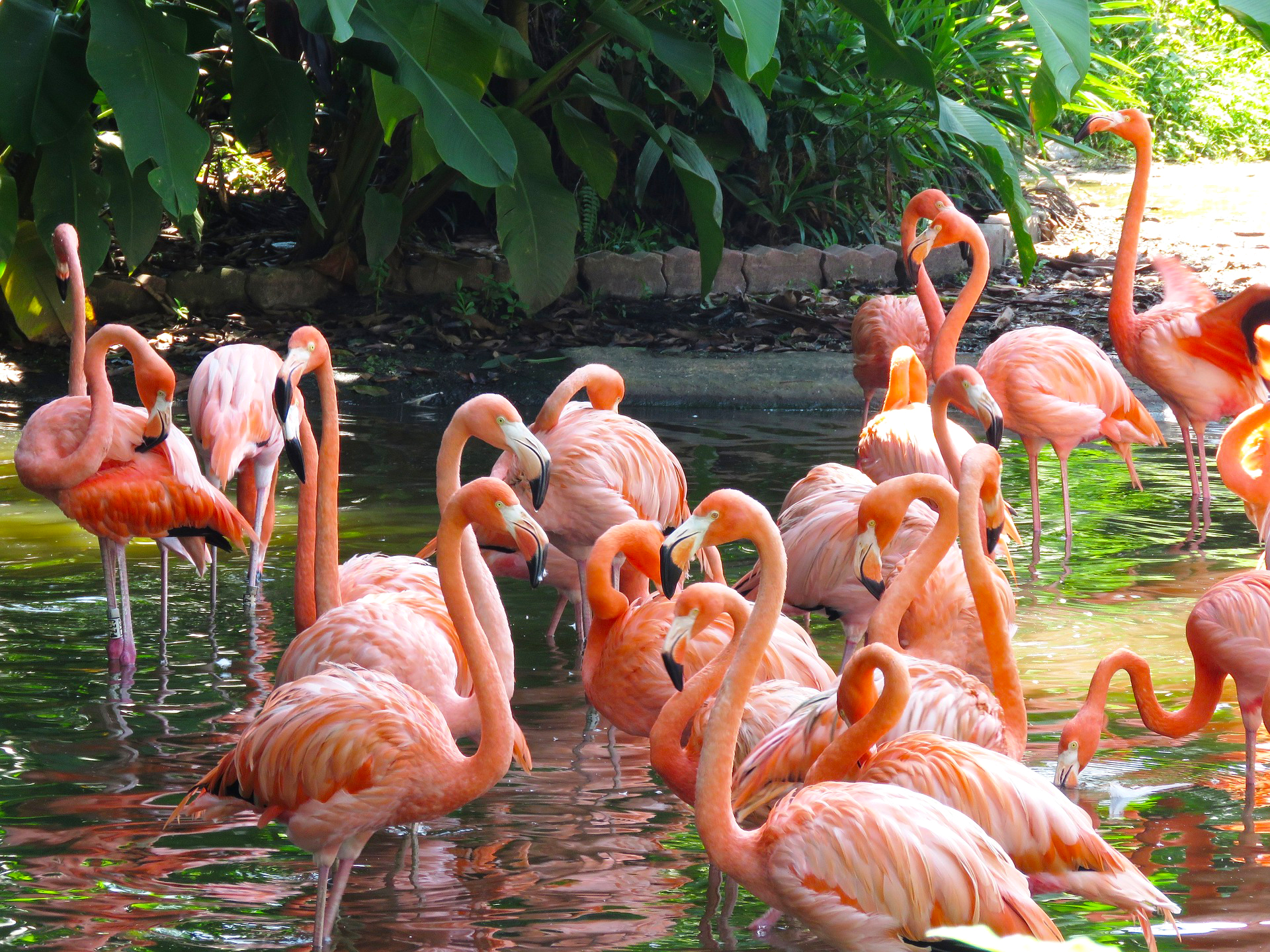 flamingo - pixabay