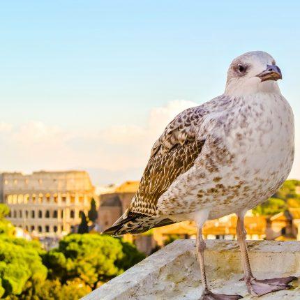 Putovanje u Rim